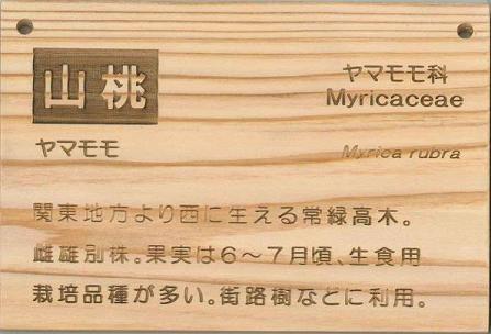 インプル木製樹名板 WA型