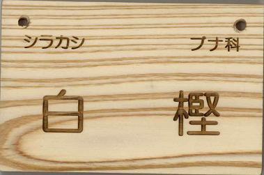 インプル木製樹名板 WB型