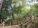 浜北森林公園