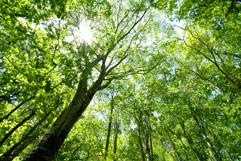 樹名板や植物用ラベル、特殊看板製造のインパル